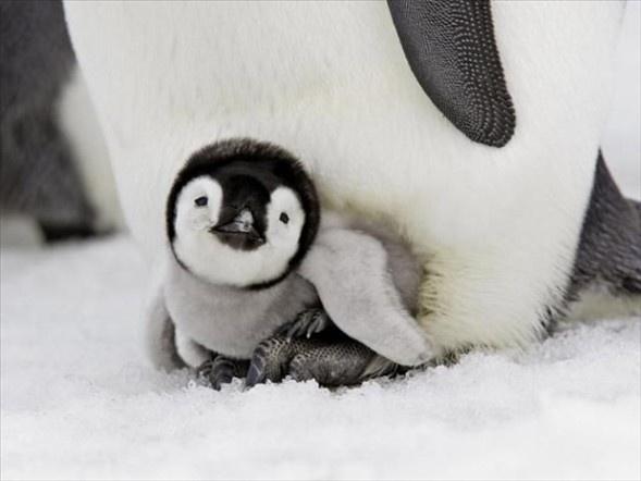 Doğanın en sevimli yavruları 20