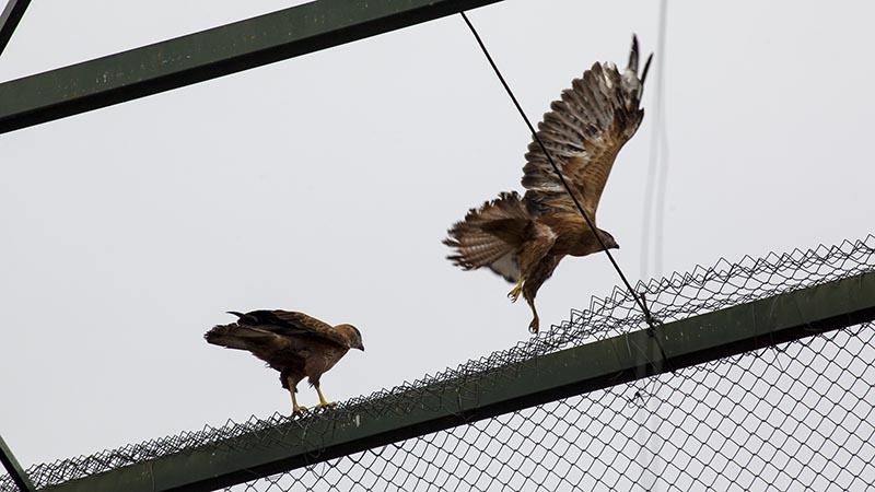 Özgürlüğe kanat çırptılar 8