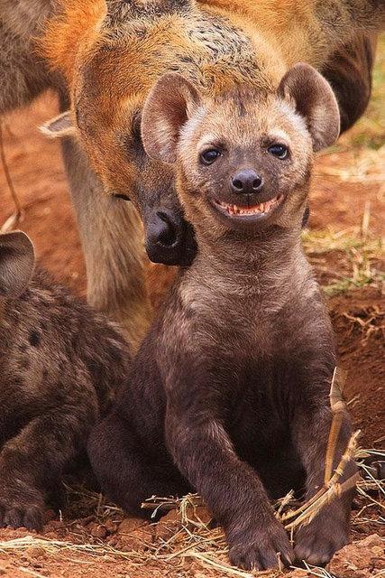 Hayvanlarda gülümser 1