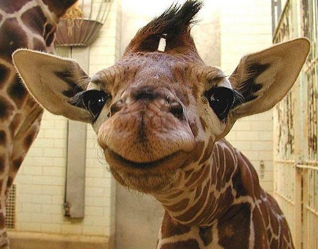 Hayvanlarda gülümser 11