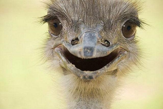 Hayvanlarda gülümser 19
