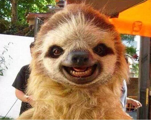 Hayvanlarda gülümser 24