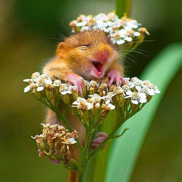 Hayvanlarda gülümser 5