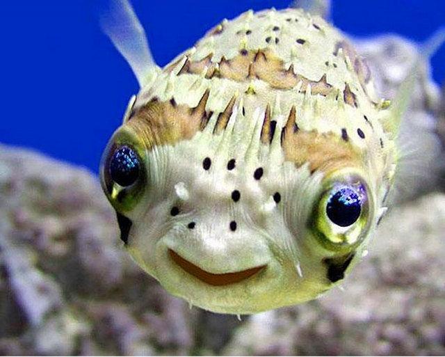 Hayvanlarda gülümser 6