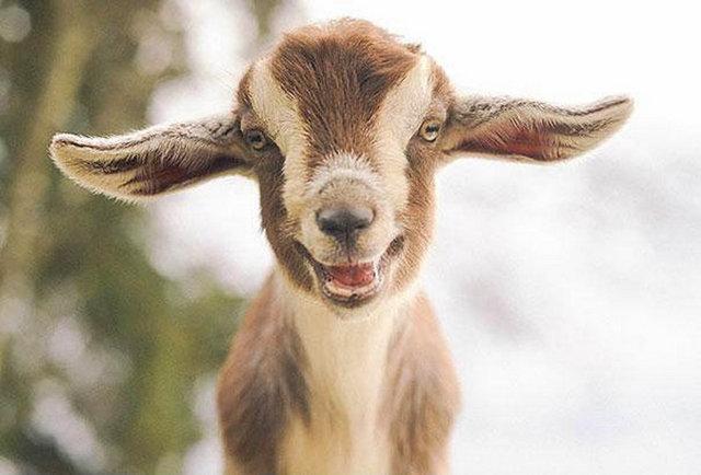 Hayvanlarda gülümser 7