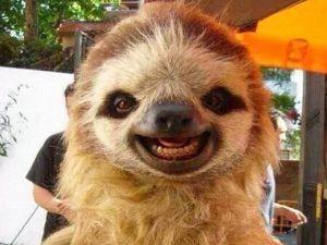 Hayvanlarda gülümser
