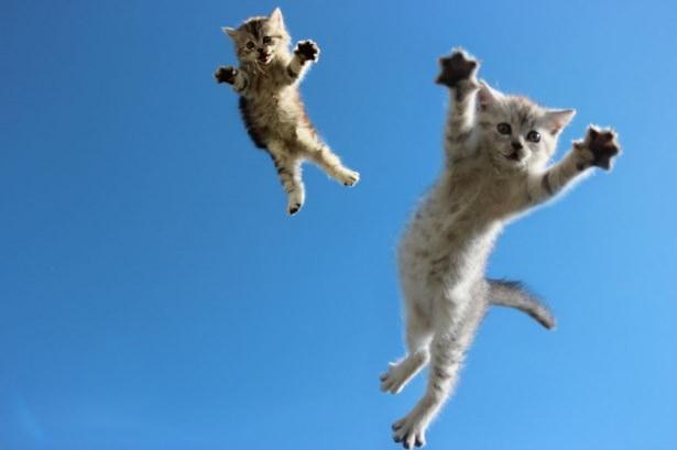 Kedileri tam o anda yakaladılar 12