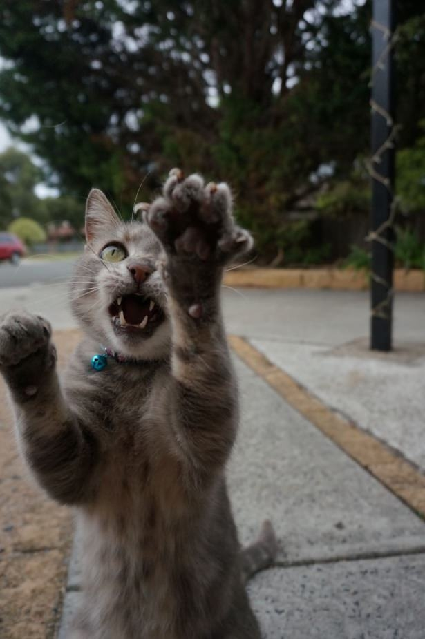 Kedileri tam o anda yakaladılar 15