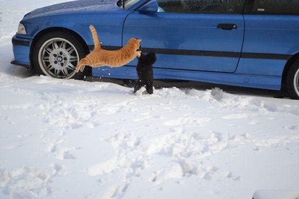 Kedileri tam o anda yakaladılar 24