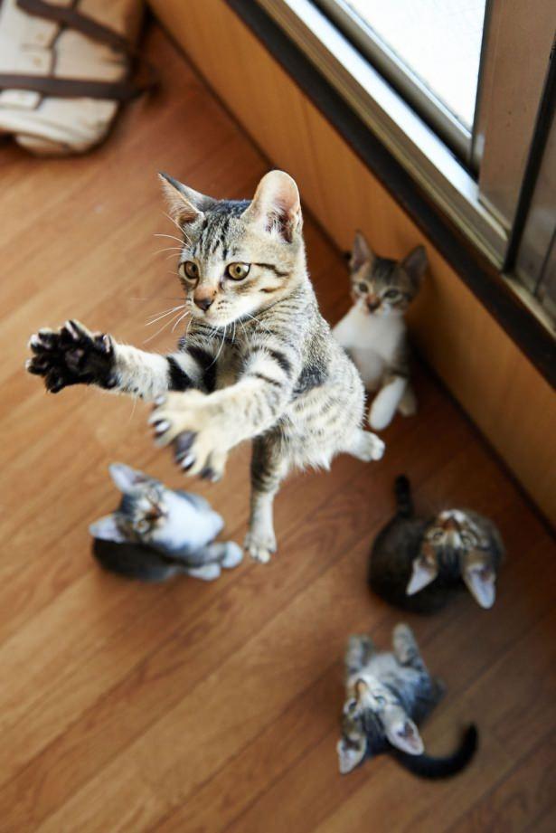 Kedileri tam o anda yakaladılar 27
