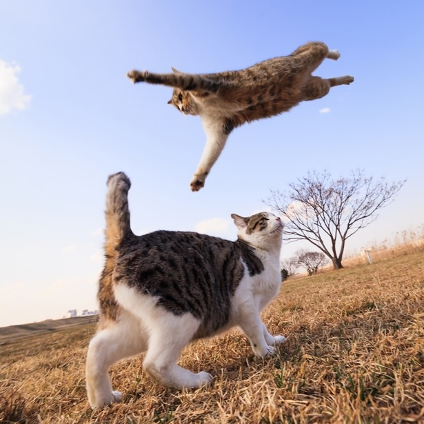 Kedileri tam o anda yakaladılar 5
