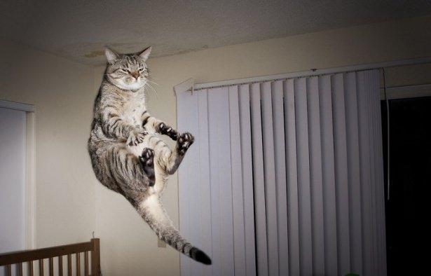 Kedileri tam o anda yakaladılar 6