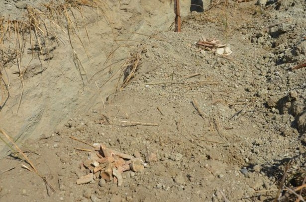 Gelibolu'da yeni bir şehitlik bulundu 13