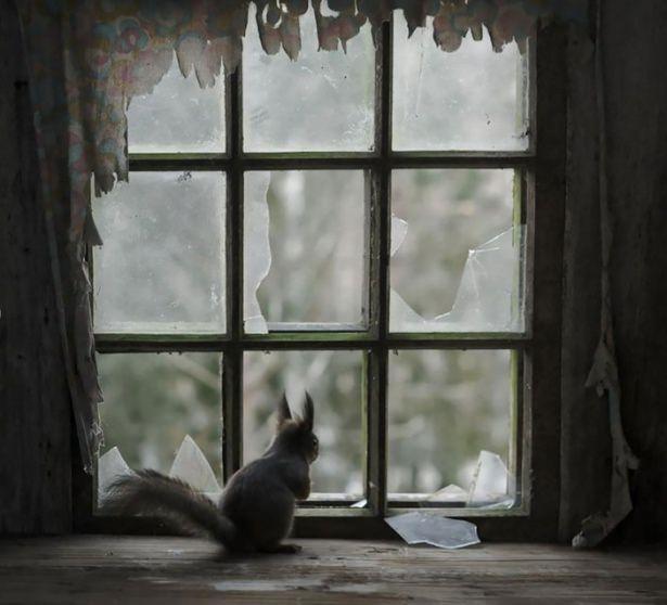 Pencere arkasında yalnız kalan hayvanlar 1