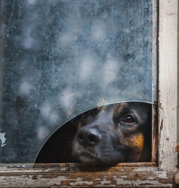 Pencere arkasında yalnız kalan hayvanlar 10