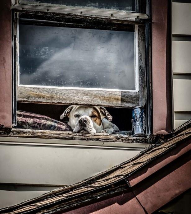 Pencere arkasında yalnız kalan hayvanlar 11