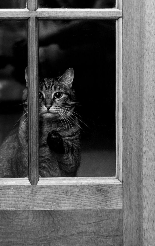 Pencere arkasında yalnız kalan hayvanlar 12