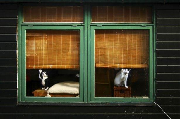 Pencere arkasında yalnız kalan hayvanlar 13