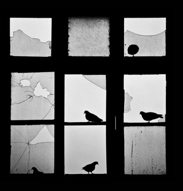 Pencere arkasında yalnız kalan hayvanlar 14