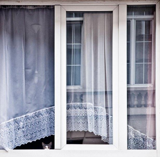 Pencere arkasında yalnız kalan hayvanlar 15