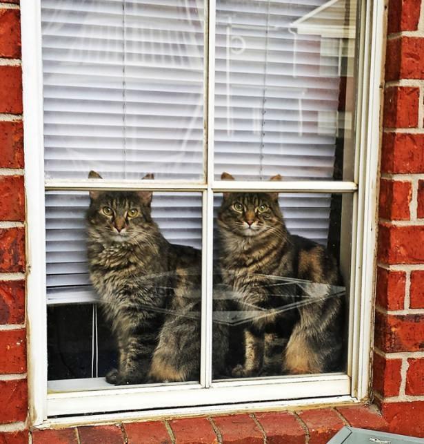 Pencere arkasında yalnız kalan hayvanlar 16