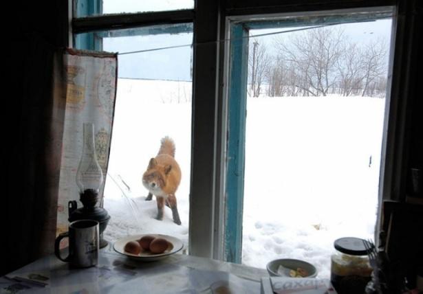 Pencere arkasında yalnız kalan hayvanlar 17