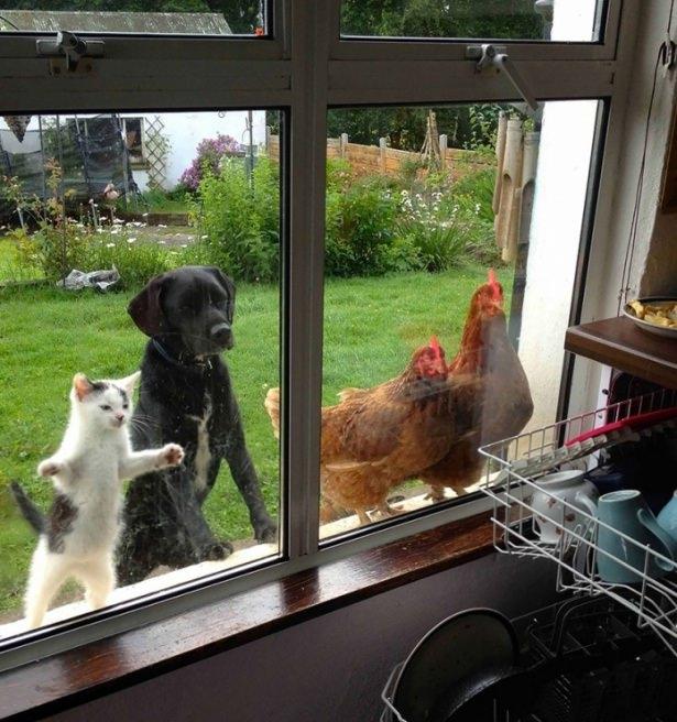 Pencere arkasında yalnız kalan hayvanlar 18