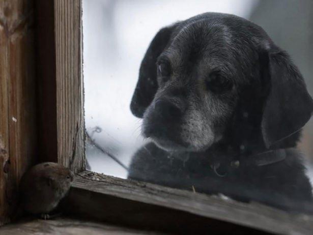 Pencere arkasında yalnız kalan hayvanlar 2