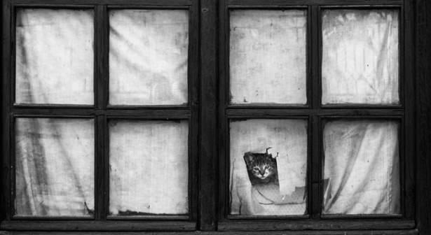 Pencere arkasında yalnız kalan hayvanlar 3