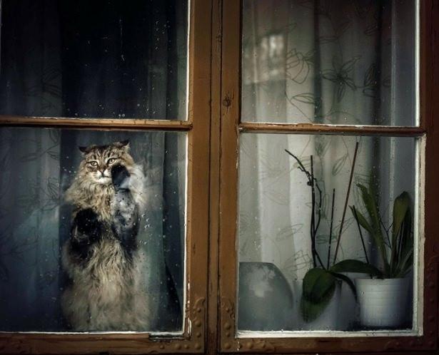 Pencere arkasında yalnız kalan hayvanlar 4