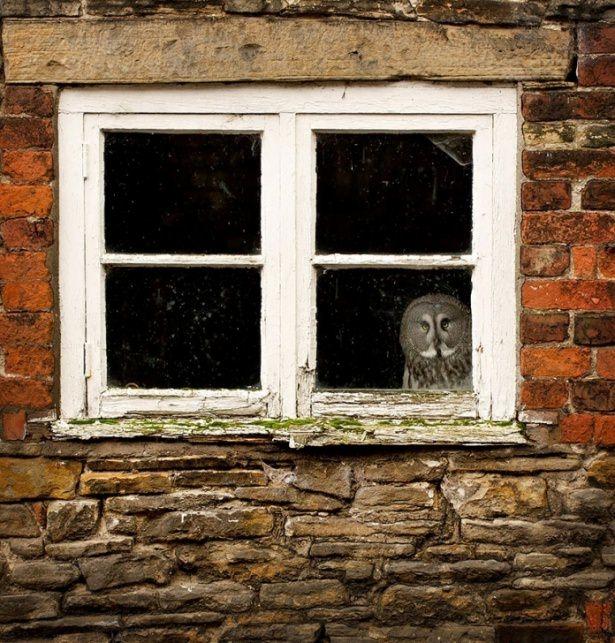 Pencere arkasında yalnız kalan hayvanlar 5