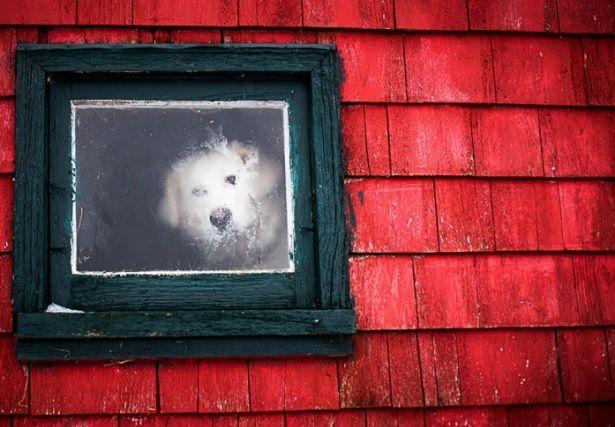 Pencere arkasında yalnız kalan hayvanlar 6