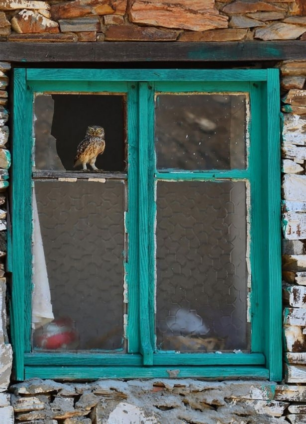 Pencere arkasında yalnız kalan hayvanlar 7