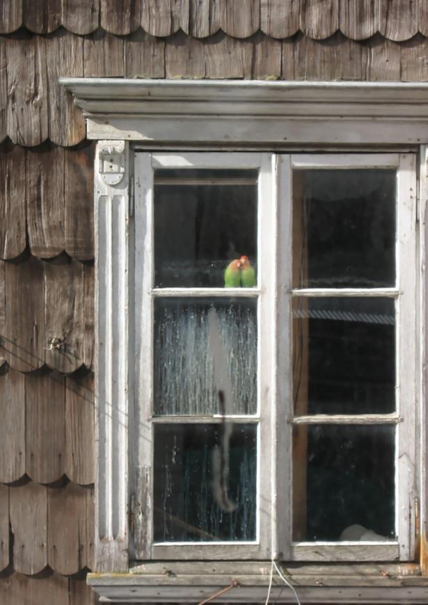 Pencere arkasında yalnız kalan hayvanlar 8