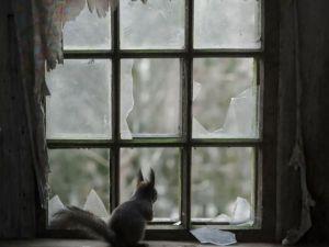 Pencere arkasında yalnız kalan hayvanlar