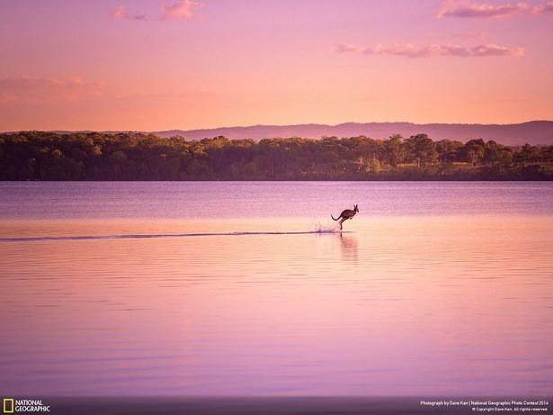 NG'den en iyi doğa fotoğrafları 1