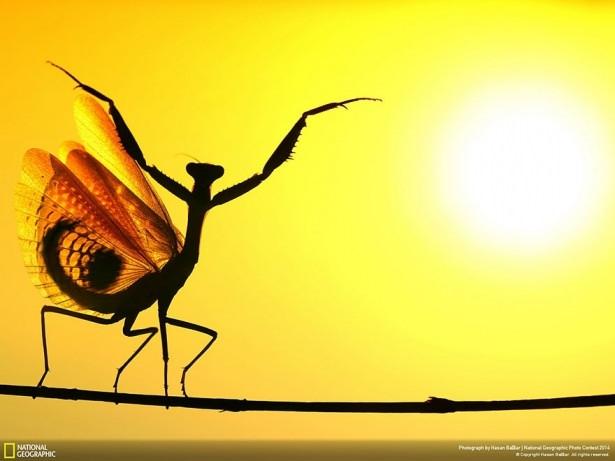 NG'den en iyi doğa fotoğrafları 11
