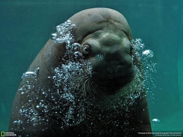 NG'den en iyi doğa fotoğrafları 15
