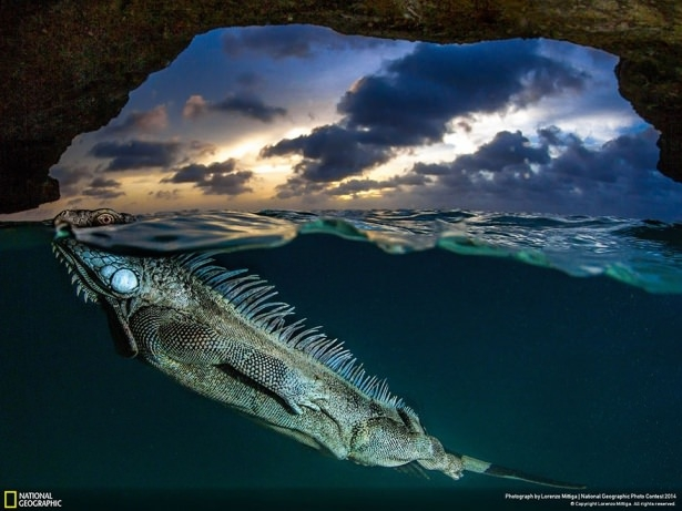 NG'den en iyi doğa fotoğrafları 18