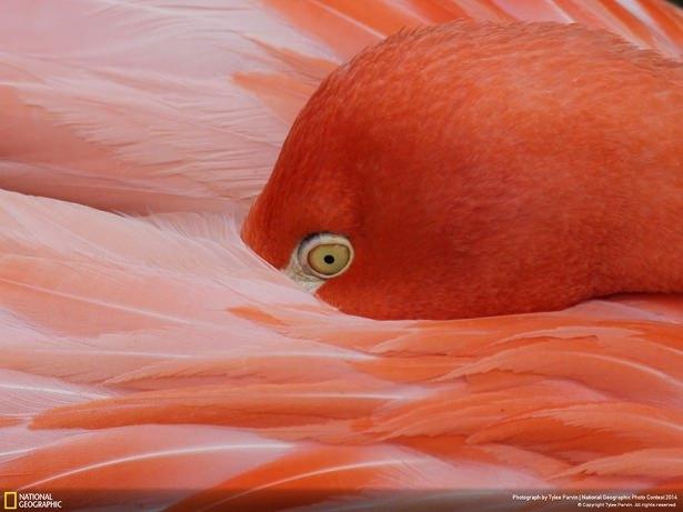 NG'den en iyi doğa fotoğrafları 19