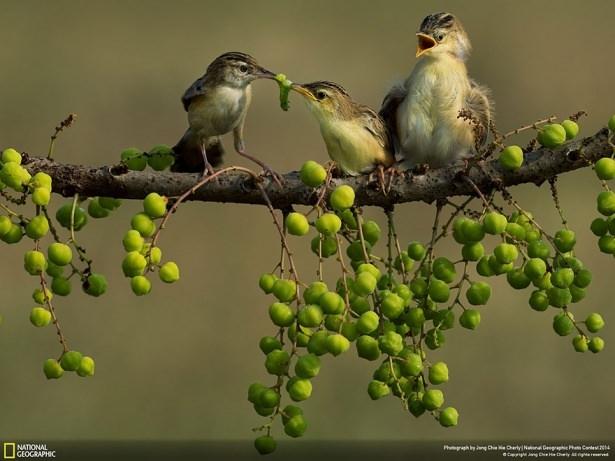 NG'den en iyi doğa fotoğrafları 21