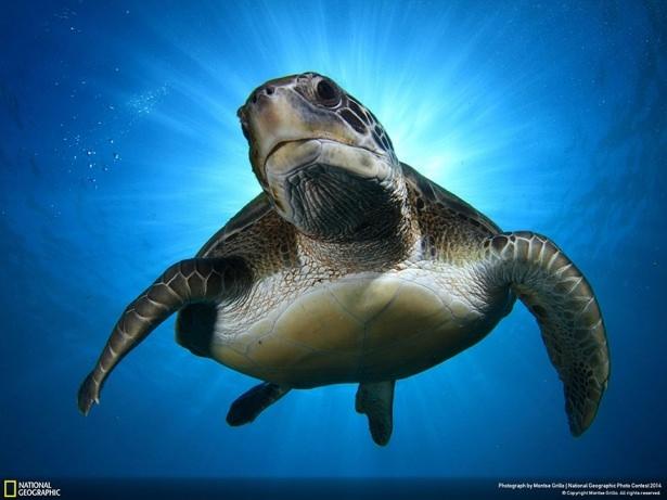 NG'den en iyi doğa fotoğrafları 7