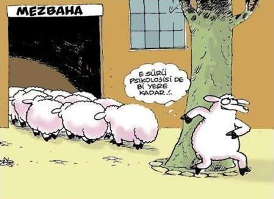 Birbirinden komik kurban karikatürleri 28