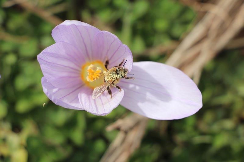 Kar çiçekleri yaylalarda güzel görüntüler oluşturdu 3