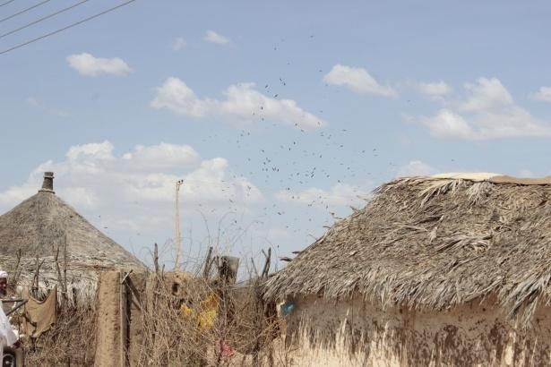 Afrika'nın en büyüğü Sudan'da bayram 17
