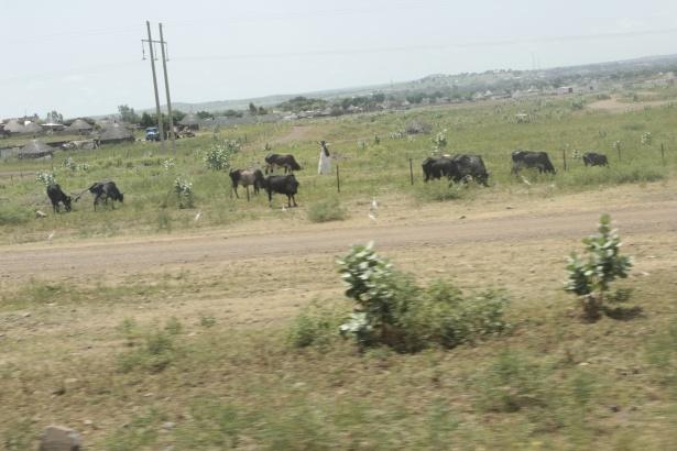 Afrika'nın en büyüğü Sudan'da bayram 2