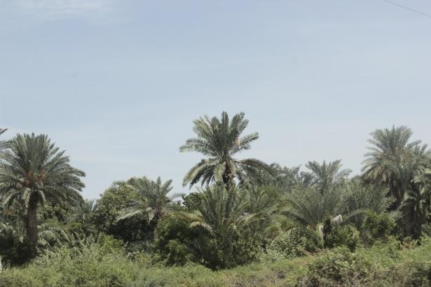Afrika'nın en büyüğü Sudan'da bayram 3