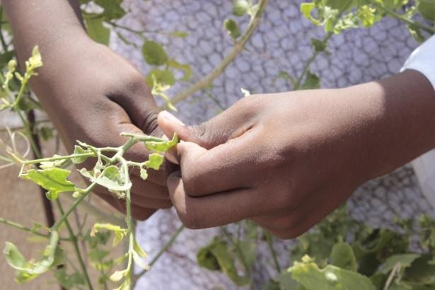 Afrika'nın en büyüğü Sudan'da bayram 35