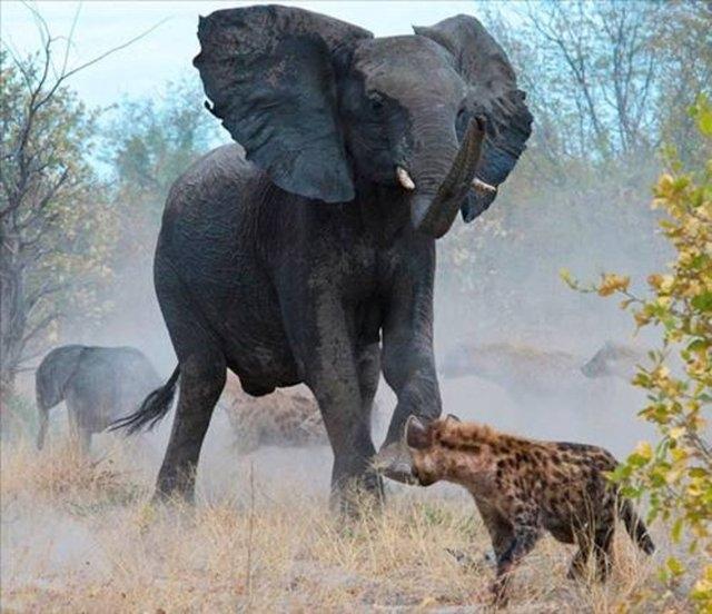Vahşi doğadaki savaş 12