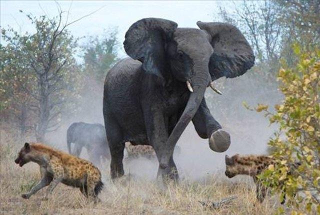 Vahşi doğadaki savaş 13